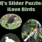 Обложка Q's Slider Puzzle: iLove Birds