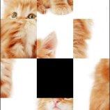 Скриншот SlidePuzzle - Baby Kitten – Изображение 1