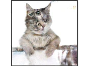 Нейросеть «оживляет» рисунки котов. Выглядит жутко