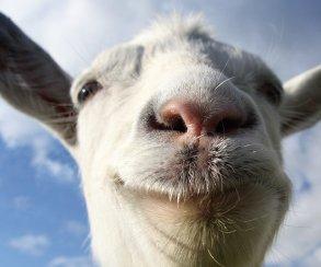 1 апреля отметят симулятором козла