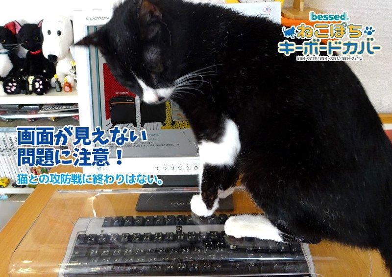 Японские дизайнеры разрешили котам лежать на клавиатурах - Изображение 1