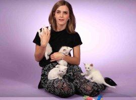 Видео дня: Эмма Уотсон отвечает на вопросы, играясь с котятами