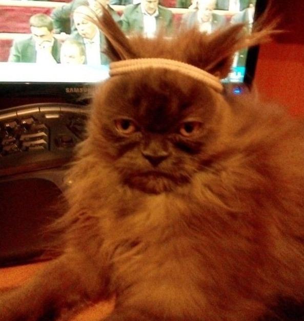 Ненависть, грусть, безысходность и коты. Вспоминаем самые забавные фотографии ко дню кошек!. - Изображение 7