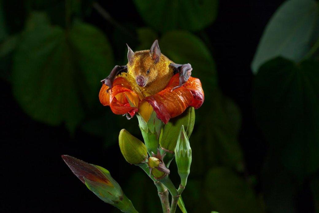 Хэллоуин еще некончился: лучшие фотографии летучих мышей отNatGeo | Канобу - Изображение 4688